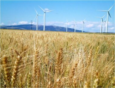 Montana Wind