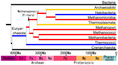 Phylogenetic tree of methanogens. Art by Crion. Wikimedia Commons.