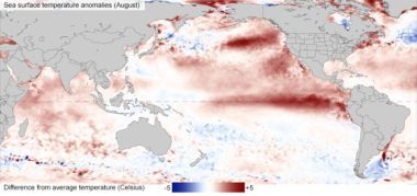 The El Nino phenomenon sees surface waters warm dramatically in the eastern Pacific.