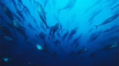 The report analysed more than 1,200 species of marine creatures in the past 45 years. Science Photo Library