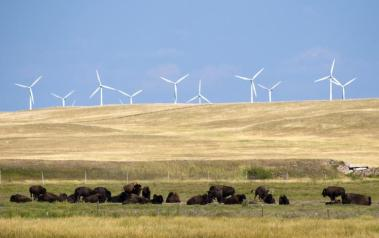 Wind park in the US. Author: CGP Grey. License: Creative Commons, Attribution 2.0 Generic.