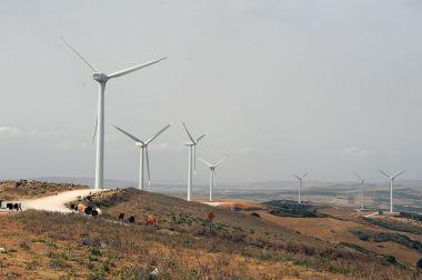 Wind farm in Tunisia. Photo by Citizen59. CC BY-SA 3.0. Wikimedia Commons.
