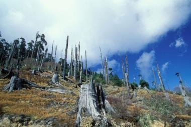 Deforestation and forest degradation