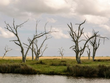 Ghost trees have fallen victim to salt water intrusion. Photo by William Widmer / Redux for CNN