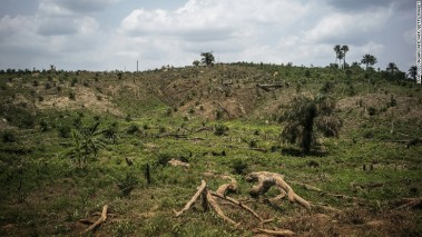 Deforestation for palm oil in Liberia.