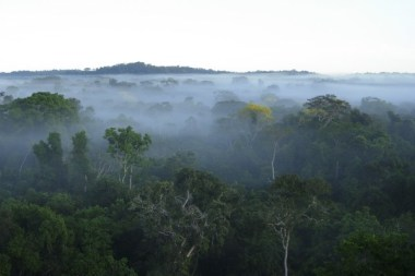 Rainforest in Brazil. Alexander Lees/Reuters / File