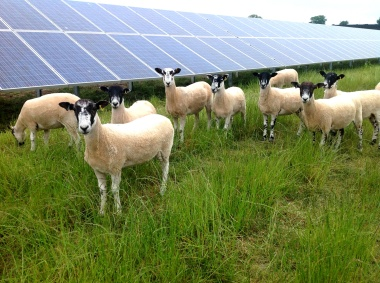 Six thousand acres of farmland are currently under contract with solar developers. Image: Lightsource.
