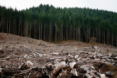 Clear-cut forest in Oregon. Photo by Calibas. CC BY-SA 3.0. Wikimedia Commons.