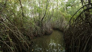 The economic value of ecosystem services provided by mangroves is estimated to be $194,000 (£148,000) per hectare. Seacology.