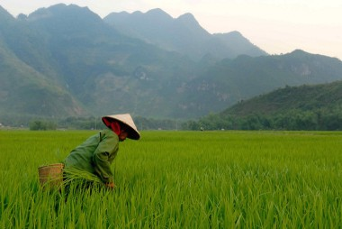 Vietnamese countryside.