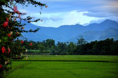 View of rice fields on Negros Island. (Photo by Amandogallaza. CC BY SA. Wikimedia Commons)