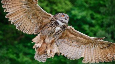 Owl (Photo by Shutter Stock/Matt Gibson)