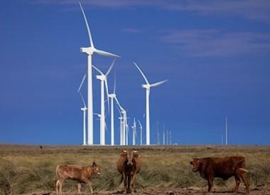 Wind farm in Mexico (Iberdrola image)