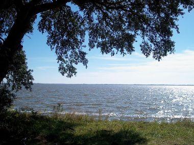 Live oak on the coast of Virginia (photo by Wyatt Greene, CC BY SA, Wikimedia Commons)