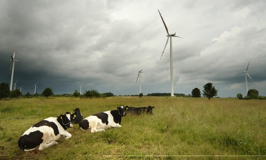 Polish wind farm