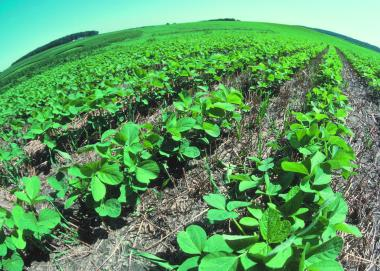 Soy beans (Credit: US Department of Agriculture)