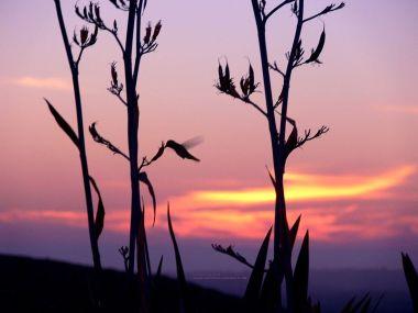Hummingbird in San Diego County  (Scott Cameron, Wikimedia Commons)