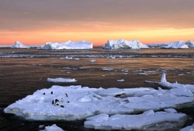 Adelie penguins (Pauline Askin / Reuters)